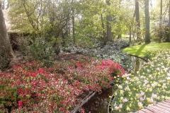 Тюльпаны Парк Кекенхоф